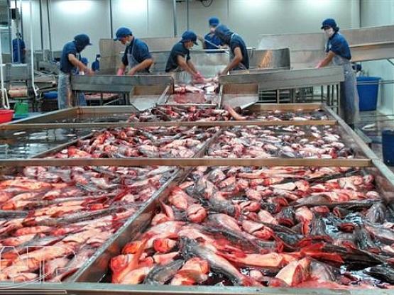 Переработка замороженной рыбы